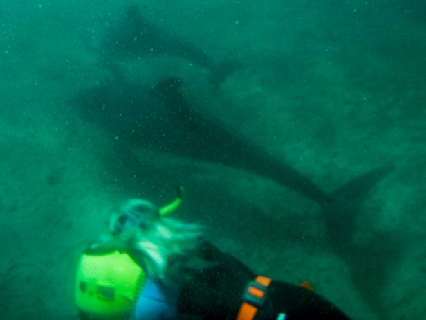 9-swim-with-dolphin